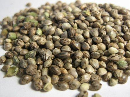 Условия хранения семян конопли фото бошек из конопли