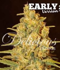 Critical Sensi Star Early Version Delicious Seeds