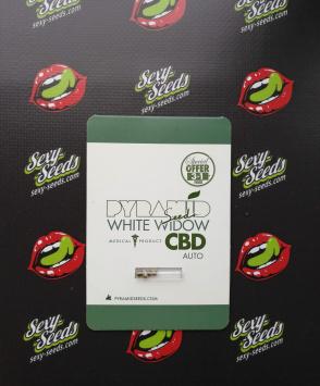 семена конопли Auto White Widow CBD