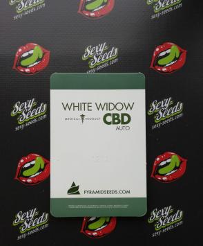 Auto White Widow CBD Pyramid Seeds