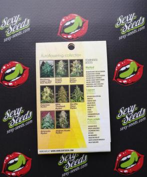 семена конопли Wild Thailand Ryder