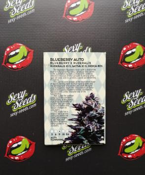 Blueberry Auto Amsterdam Seeds