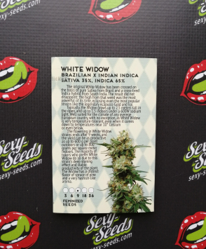 White Widow Amsterdam Seeds
