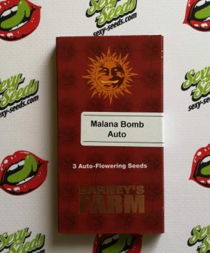 malana bomb barneys farm